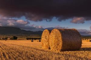 Round straw bales in the fields at sunset