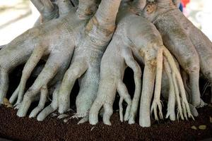 Roots arranged over the ground beautifully