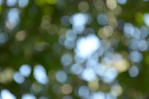 green color of bokeh background