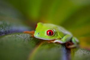 Exotic frog, vivid jungle theme photo