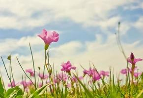 Flowers and Sky photo