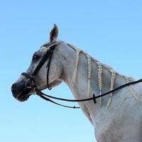 Horse on blue sky photo