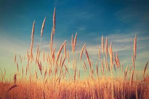 reeds over blue sky