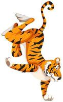 Tiger standing on one hand vector