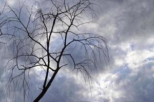 silhouet van bladloze boom