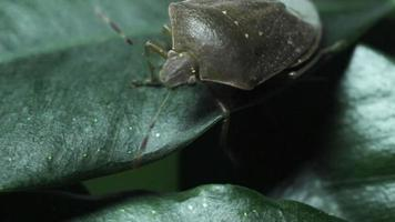 crum verde sulle foglie video