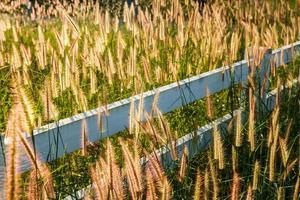 flores de grama com o fundo do céu.