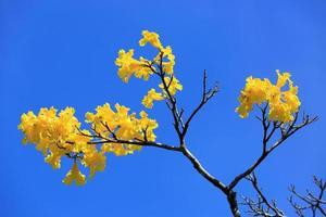 Yellow brunch on blue sky
