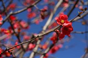 Pink Flower Blue Sky photo