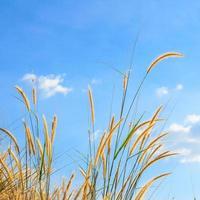 steppe grass against blue sky photo