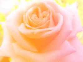 beautiful flowers made with color filters photo