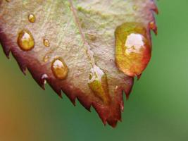 leaf with drops of rain