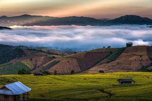 campo de arroz en terrazas