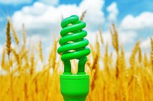 green eco bulb over field with golden harvest