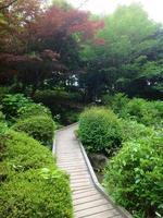 jardín japonés foto