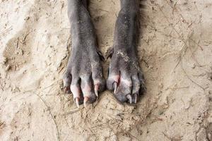 cane a piedi sulla sabbia