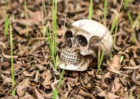 cráneo solitario en el montón de hojas secas