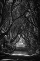 Dark Hedges in shades of grey photo
