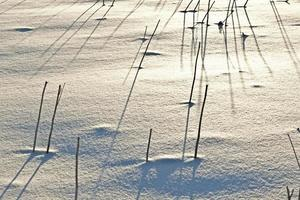 shadow of halm on snow covered field photo