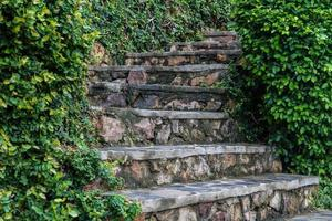 Old stone steps with greenery growing between and in crevices.