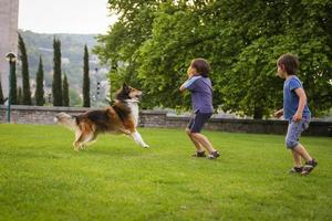 deux petits garçons jouant avec un chien dans le parc