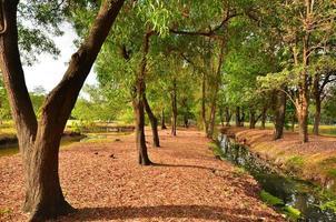 Nature in Metro Park
