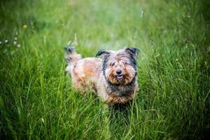 Happy Dog On Grass