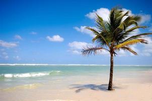 Palm on beach photo