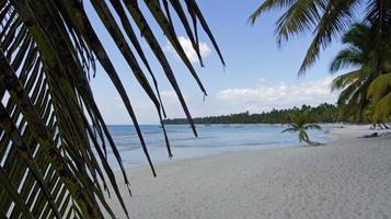saona island photo