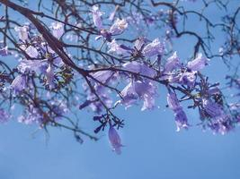 Violet Flowers against Blue Sky photo