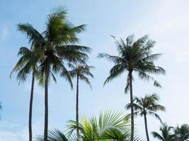 Coconut trees and blue sky