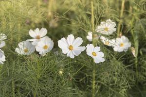 Flor de margaritas blancas sobre fondo de cielo azul