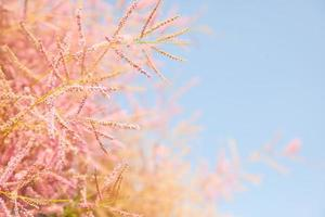 pink tree blossom on blue sky background,