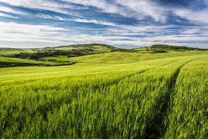 Green field and blue sky in Tuscany