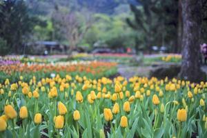 Beautiful bouquet of tulips photo