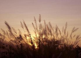 cielo del atardecer de colores naranja y amarillo brillante foto