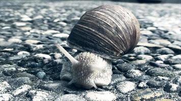 escargot rampant sur le trottoir en béton video
