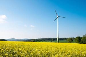 Blue sky, rapeseed and windwheel