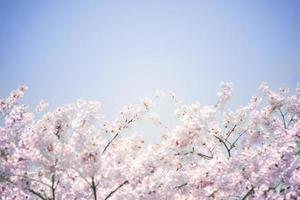 Abstract image of cherry blossoms and blue sky.