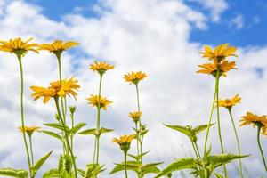 yellow flowers in front of a cloudy blue sky