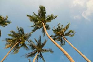 Tropical coconut palm trees on clear blue sky background