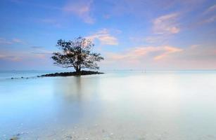 tree growing right middle of a lake at dusk photo