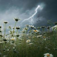Lightning strike over field. photo