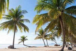 Coconut Tree on the Beach photo