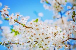 bright branch of blossoming cherry tree on sky background instag