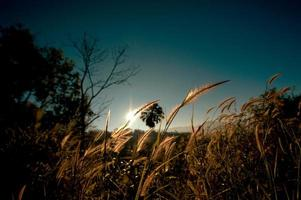 abstract softness white Feather Grass with retro sky blue backgr photo