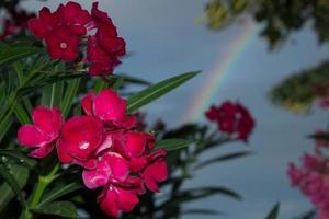 Flowers and raimbow