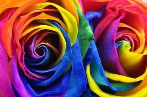 Rainbow rose or happy flower