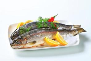 Two fresh trout photo