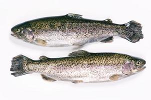Two Trouts on White Background